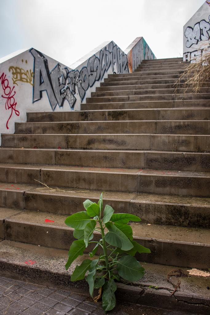 Steile Treppe mit Pflanze